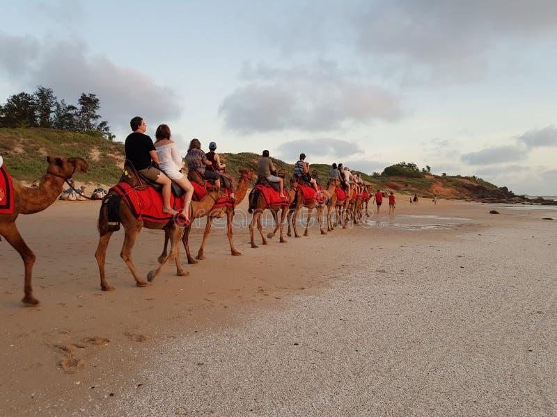 Wielbłądzia przejażdżka na kabel plaży Broome zachodniej australii zdjęcia royalty free