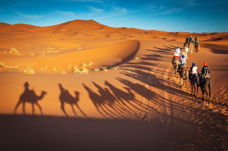 Wielb??dy trekking prowadzi? wycieczki turysyczne w saharze Merzouga Maroko zdjęcia royalty free