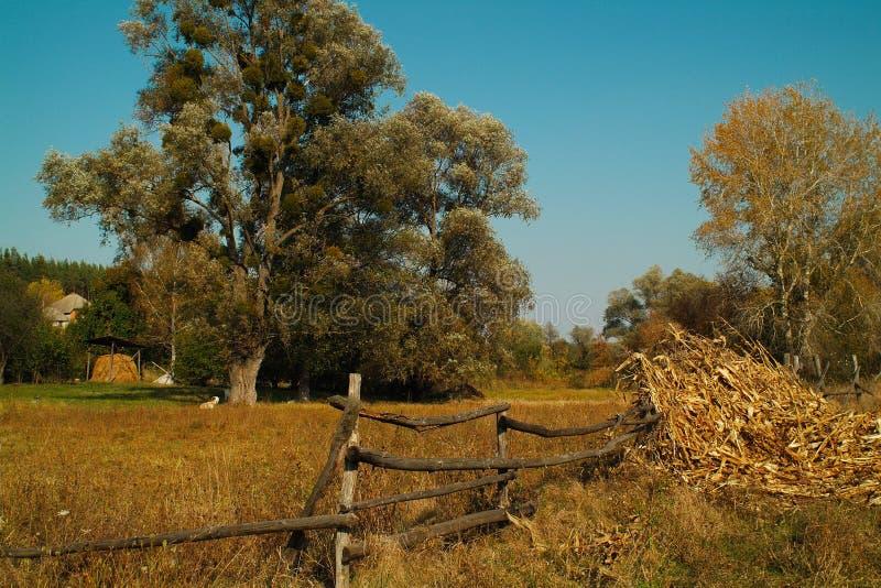 Wielcy drzewa za starym drewnianym ogrodzeniem obraz royalty free