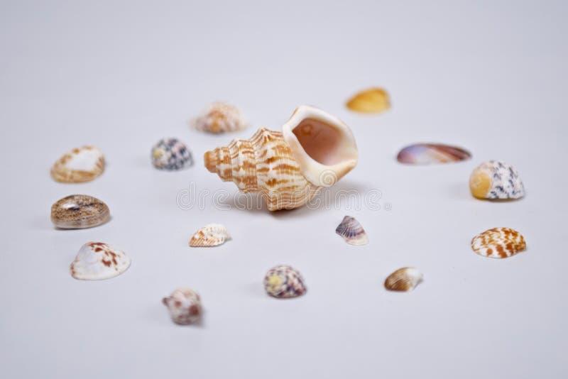 Wielcy i mali seashells na bielu obrazy royalty free