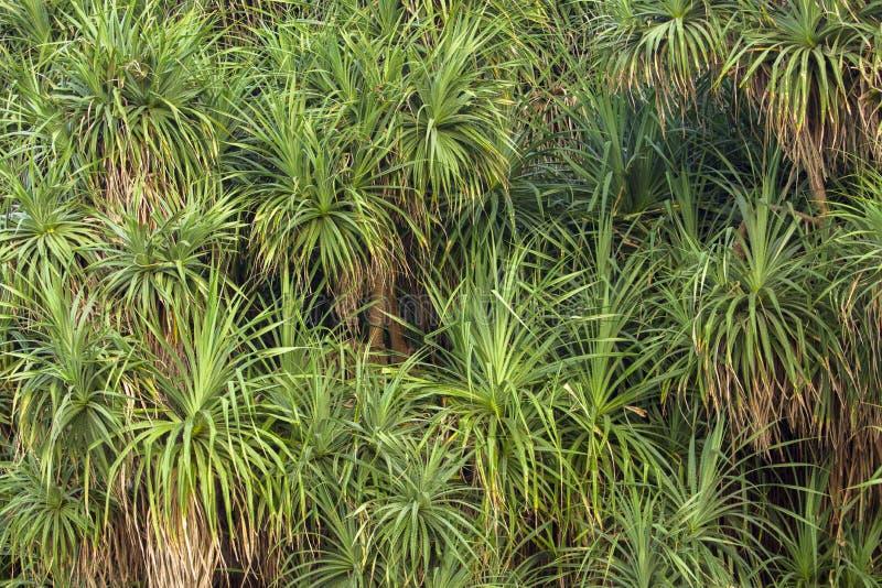 Wielcy krzaki zielony świeży i suchy aloes obrazy royalty free