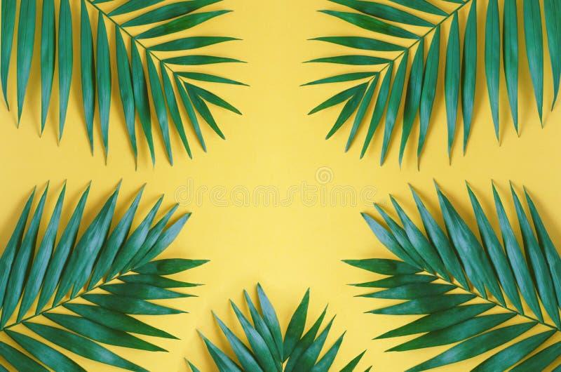 Wielcy liście drzewka palmowe na pomarańczowym tle obraz royalty free