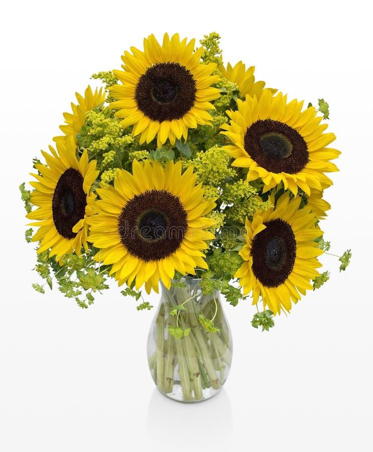 Wielcy słoneczniki w wazie na biel przestrzeni obraz royalty free
