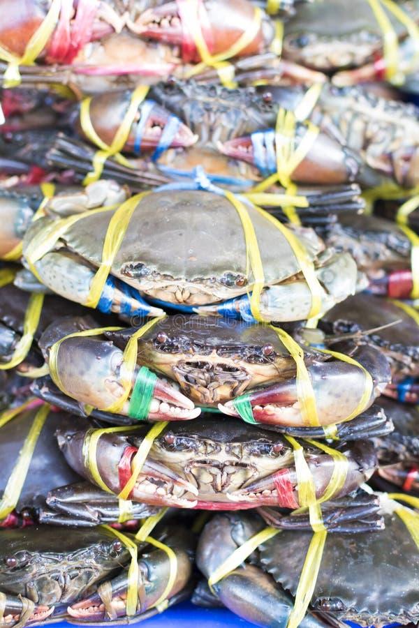 Wiele świezi kraby zdjęcie stock