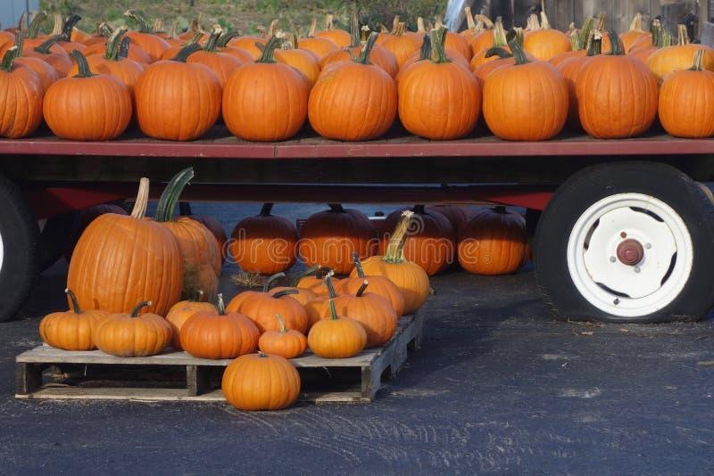 Wiele banie dla sprzedaży przy gospodarstwo rolne stojakiem w Maine obrazy royalty free