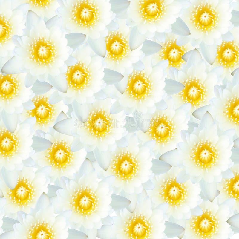 Wiele biali lotosowi kwiaty royalty ilustracja