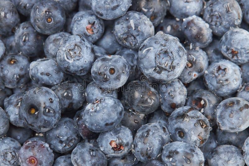 Wiele czarnych jagod jagody z wodą opuszczają jako tło lub tło obraz stock