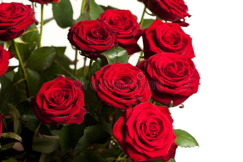 wiele czerwone róże obrazy royalty free