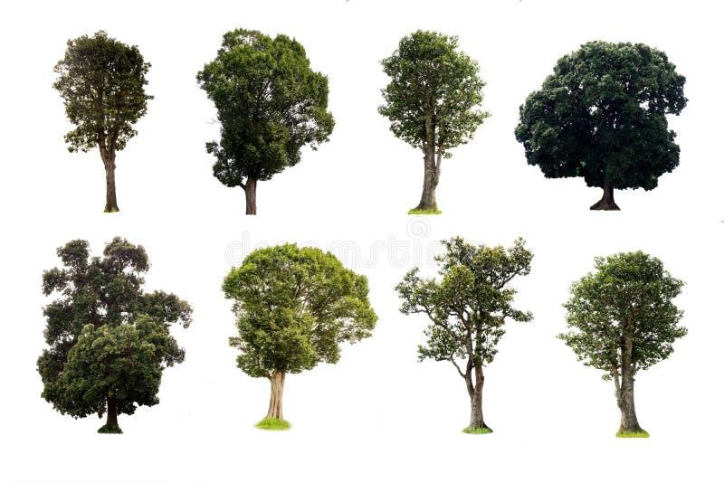 Wiele drzewa są na białym tle dekorować obraz stock