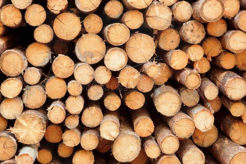 Wiele Duży Sosnowy drewno notuje Dalej Wielką Woodpile tła teksturę obrazy royalty free