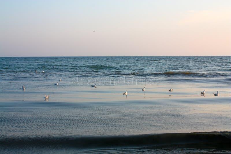 Wiele frajerów pławik na wodzie obrazy royalty free