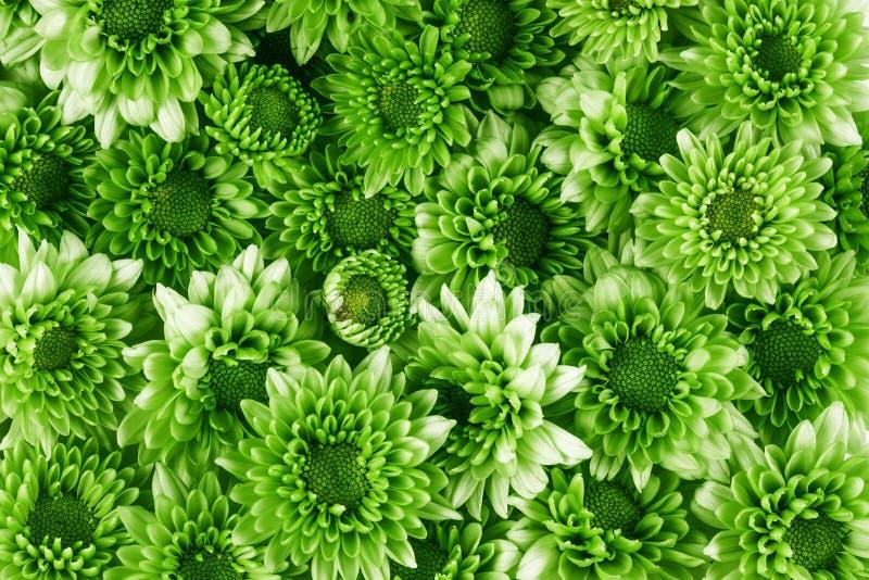 Wiele jako deseniowy tekstury tło świeży zielony kwiat, fre zdjęcia stock
