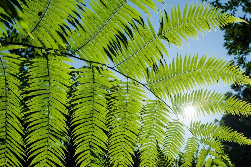 Wiele klasyfikująca roślina speciesFern, mech, torfowa mech przy wierzchem obrazy stock