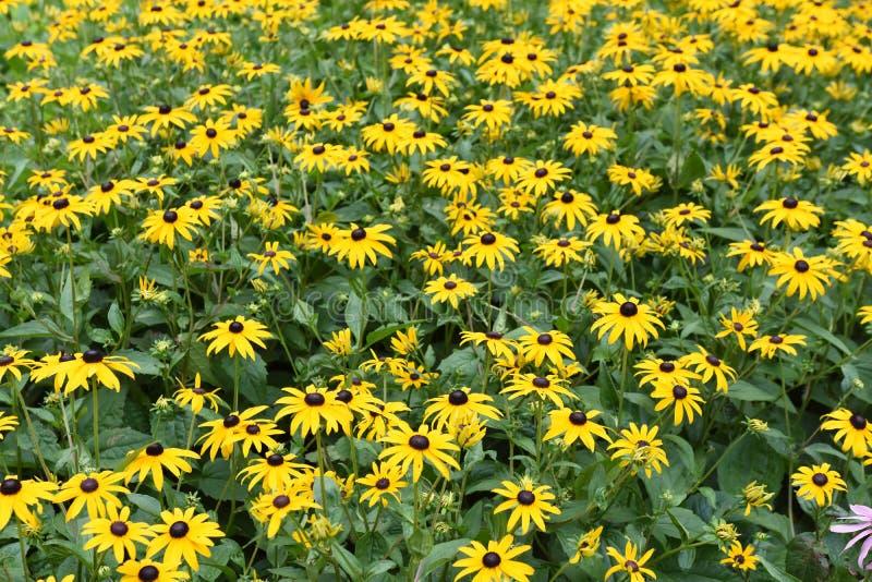 Wiele kolorów żółtych kwiaty na zielonej trawie obraz royalty free