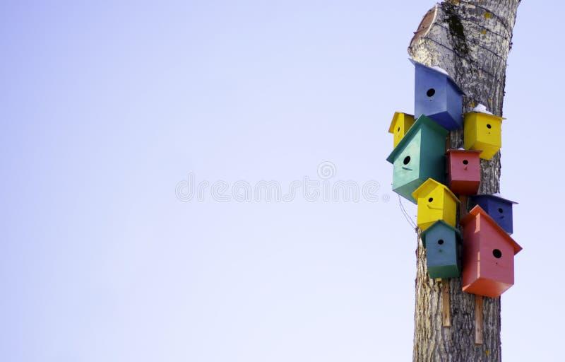 Wiele kolorowi domy dla ptaków na drzewie obraz stock