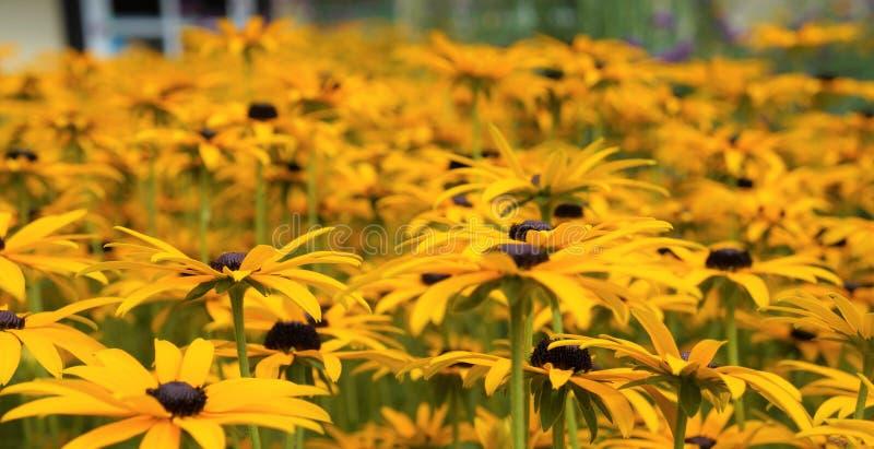 Wiele kwiaty na obrazku obraz royalty free