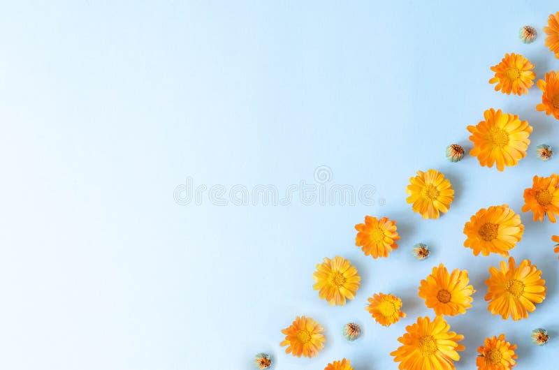 Wiele pączki pomarańczowi kwiaty na błękitnym tle zdjęcie royalty free