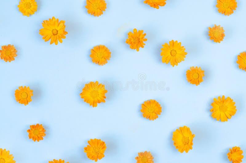 Wiele pączki pomarańczowi kwiaty na błękitnym tle obrazy stock