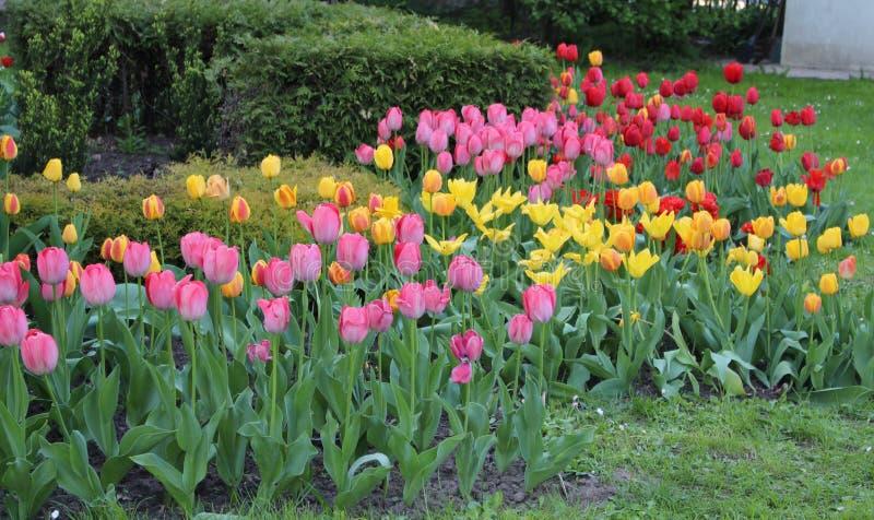 Wiele piękni kwiaty przy ich lato chałupą obrazy royalty free