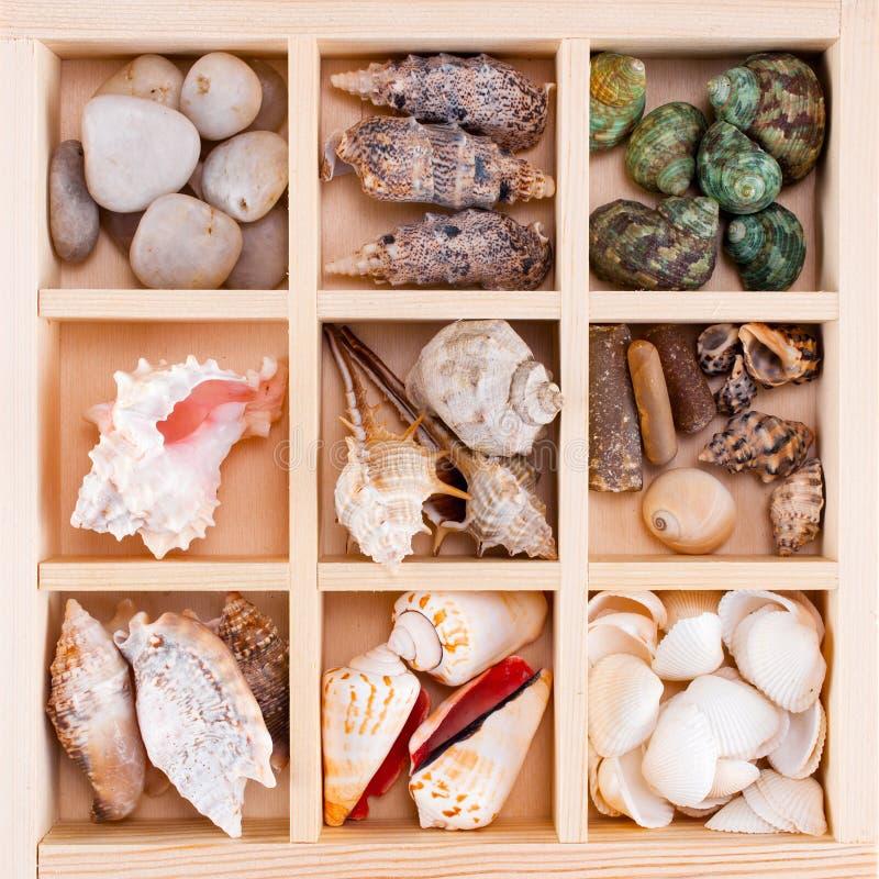 Wiele różnorodni kamienie w drewnianym pudełku i skorupy zdjęcie royalty free
