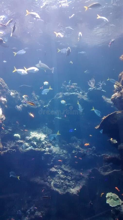 Wiele ryba w akwarium fotografia royalty free