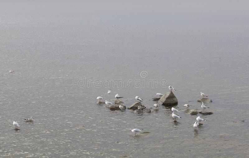 Wiele seagulls na morzu zdjęcia royalty free