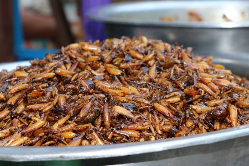 Wiele smażący insekty w dużym aluminiowym basenie zdjęcie royalty free