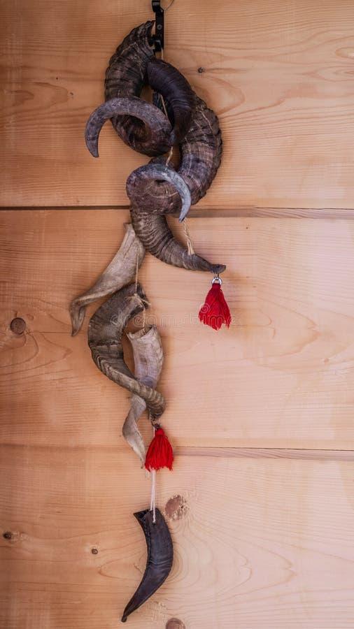 Wiele stary baran uzbrajać w rogi, dekoracyjni kręceni rogi na drewnianej ścianie Wyginający się byka róg na drewnianej ścianie zdjęcie royalty free
