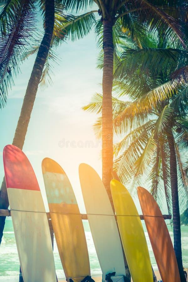 Wiele surfboards obok kokosowych drzew zdjęcia stock
