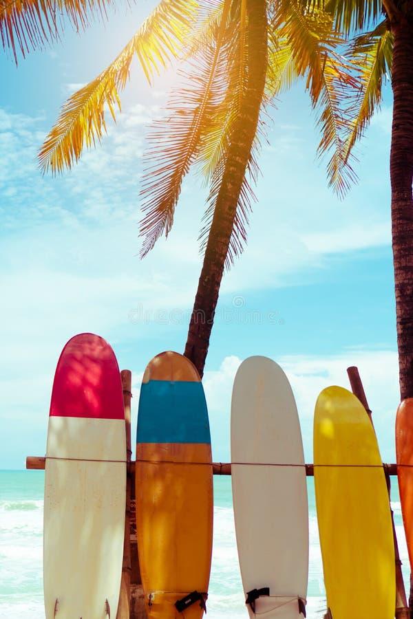 Wiele surfboards obok kokosowych drzew przy latem wyrzuca? na brzeg fotografia royalty free