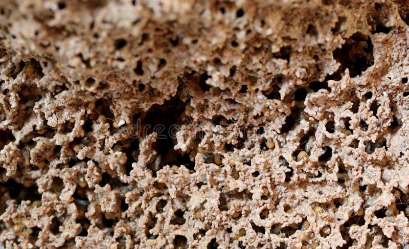 Wiele termit w gniazdeczkach obraz stock