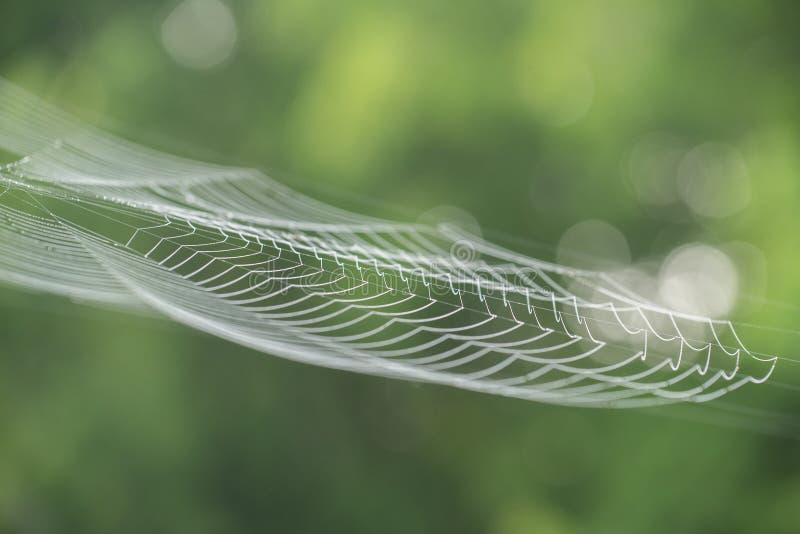 Wielka biała pająk sieć w rosie w ranku na zieleni lata b zdjęcie stock