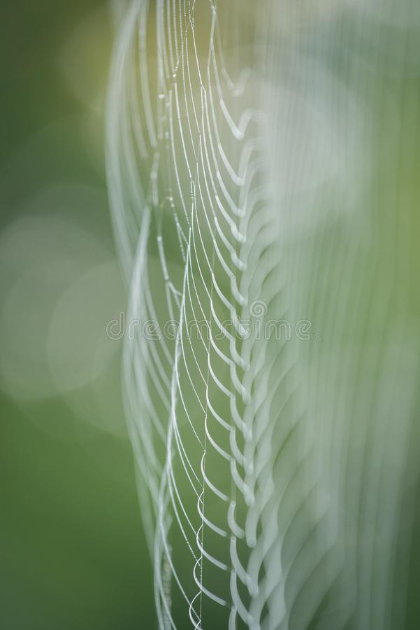 Wielka biała pająk sieć w rosie w ranku na zielonym lata tle zdjęcie royalty free