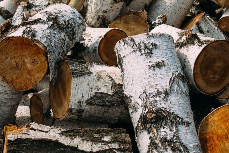 Wielka brzozy łupka zdjęcie stock