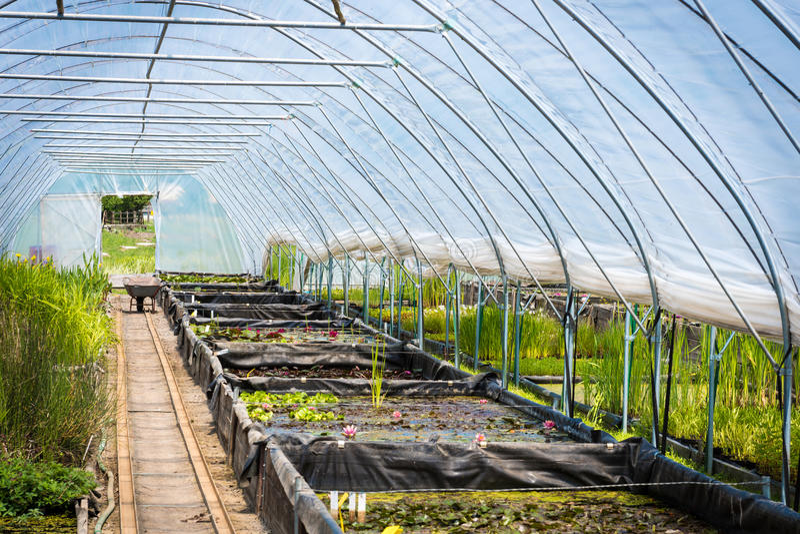 Wielka szklarnia, rośliny pepiniera, ogrodowy centre obrazy royalty free