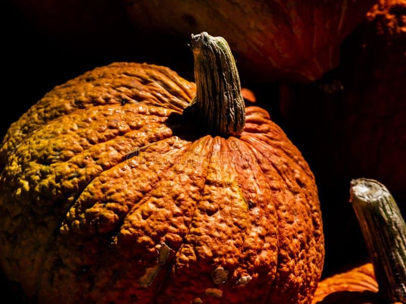 Wielka trudna pomarańczowa bania w stosie ostatnio zbierać gurdy obraz royalty free