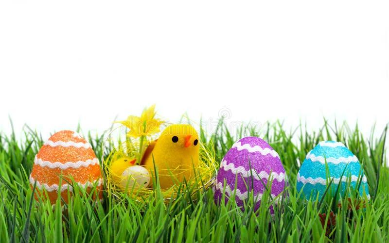 Wielkanoc kurczaka jaj obraz stock