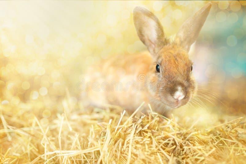 Wielkanoc Uroczy ma?y kr?lik zdjęcie stock