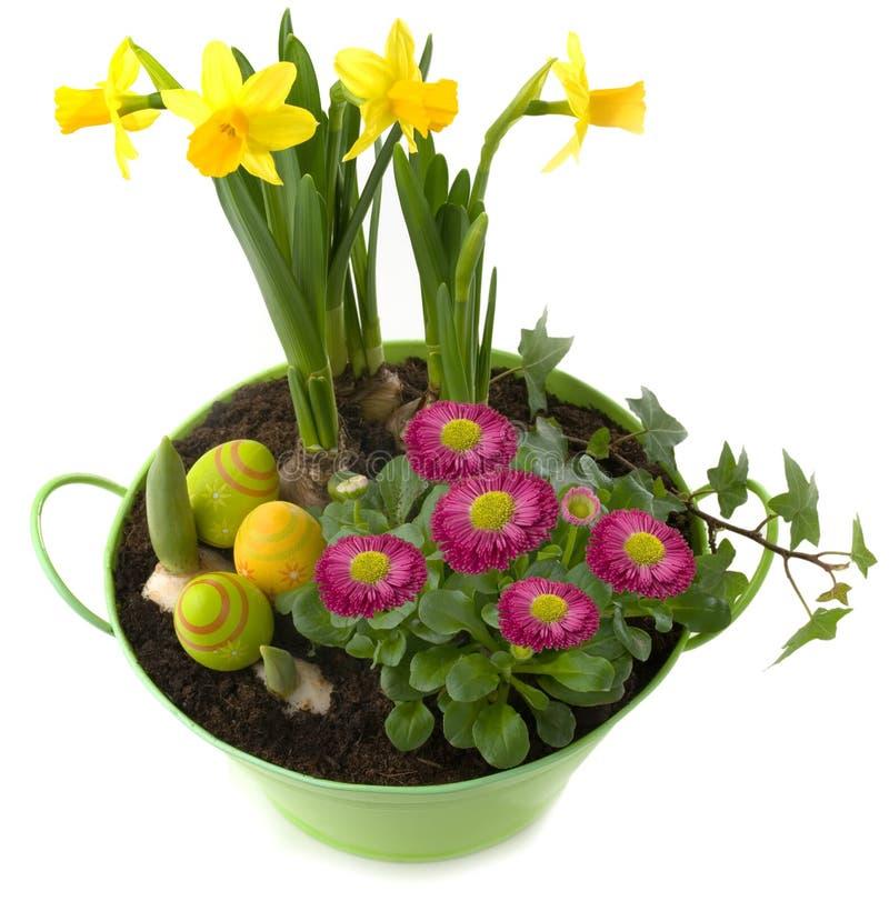 Wielkanocna dekoracja - garnek z wiosna kwiatami i kolorowymi jajkami fotografia royalty free