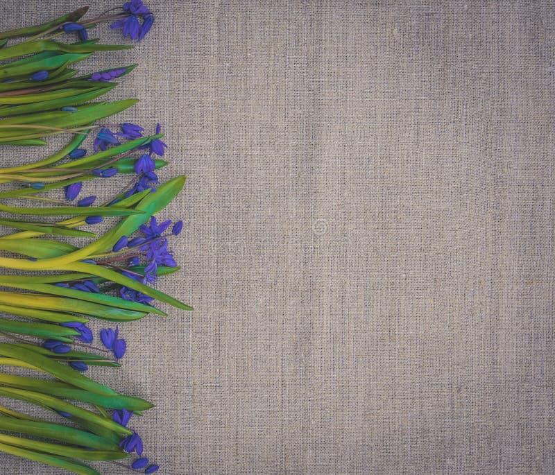 Wielkanocna karta z wiosna kwiatami Błękitna cebulicy i pościeli tkanina zdjęcie stock