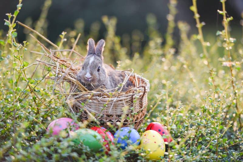 Wielkanocnego królika polowania Easter jajko na zielonej trawy natury tle zdjęcia stock