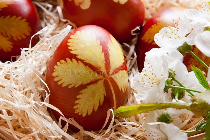 Wielkanocni jajka farbujący z cebulkowymi łupami z wzorem świezi ziele, fotografia stock
