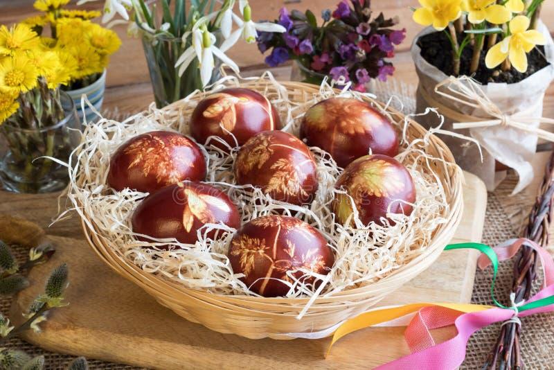 Wielkanocni jajka farbujący z cebulkowymi łupami z wzorem świezi ziele, zdjęcia royalty free
