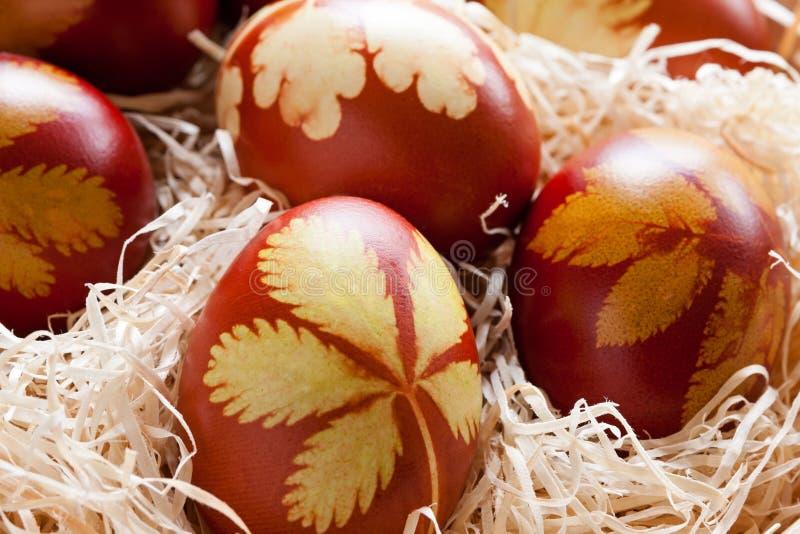 Wielkanocni jajka farbujący z cebulkowymi łupami z wzorem ziele i p, fotografia royalty free