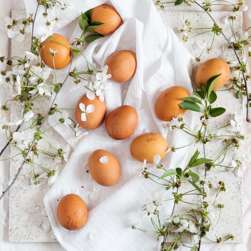 Wielkanocni jajka i jabłoni gałąź fotografia stock