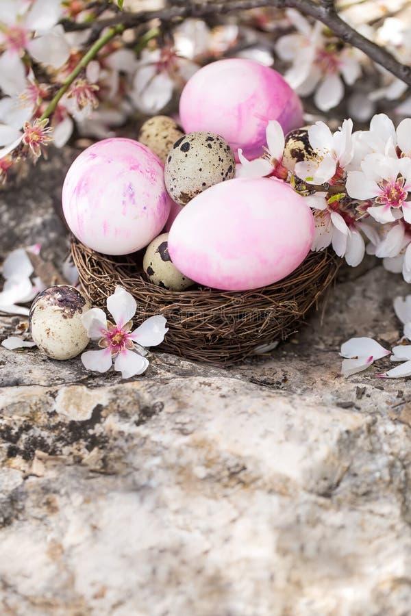 Wielkanocni jajka i okwitnięcia tło fotografia royalty free