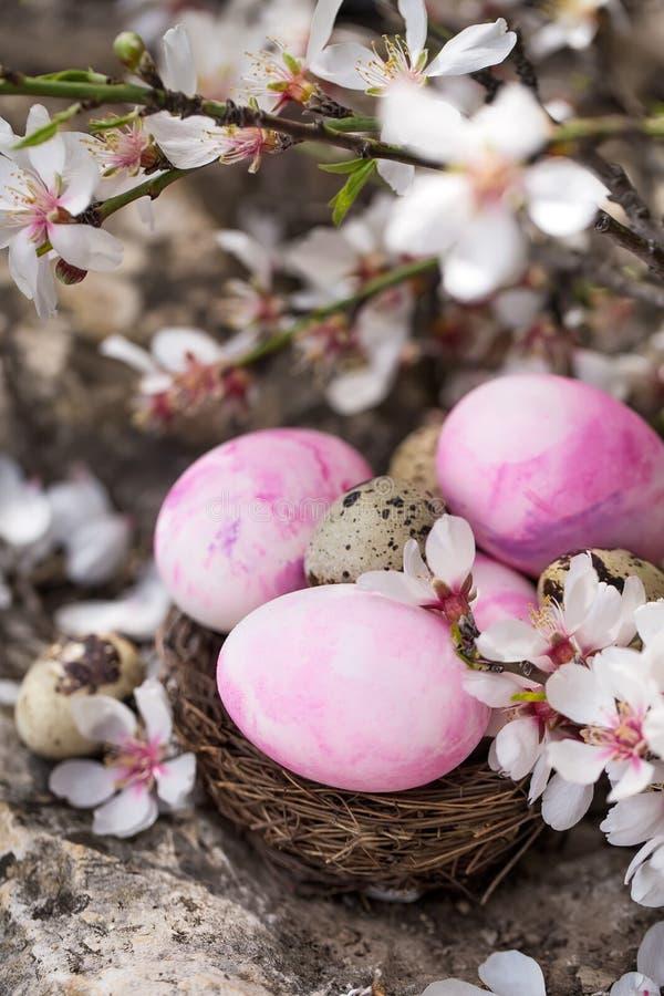 Wielkanocni jajka i okwitnięcie fotografia stock