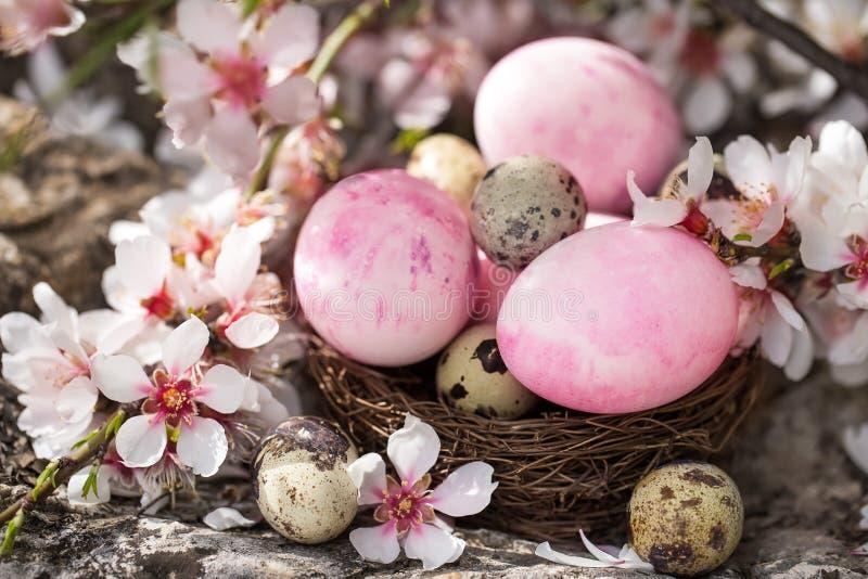 Wielkanocni jajka i okwitnięcie zdjęcia royalty free