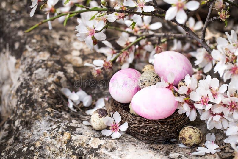 Wielkanocni jajka i okwitnięcie zdjęcie royalty free