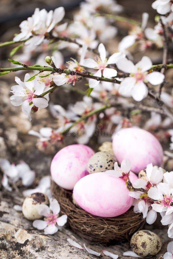 Wielkanocni jajka i okwitnięcie fotografia royalty free